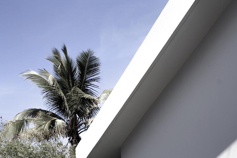 minimal architecture palm trees blue sky